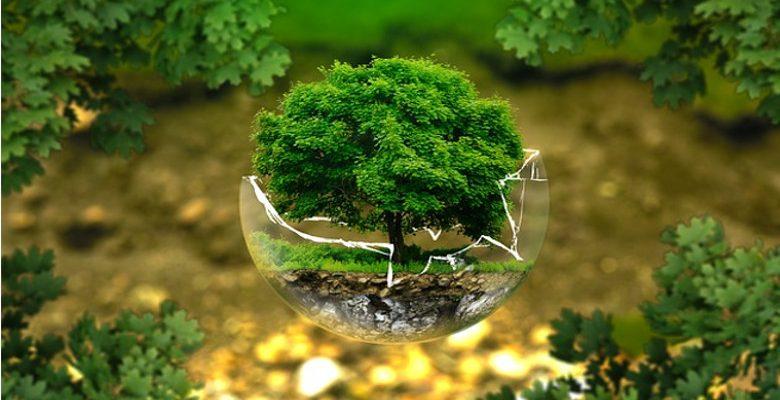 Développer son business avec les cadeaux d'entreprise écologiques et utilitaires