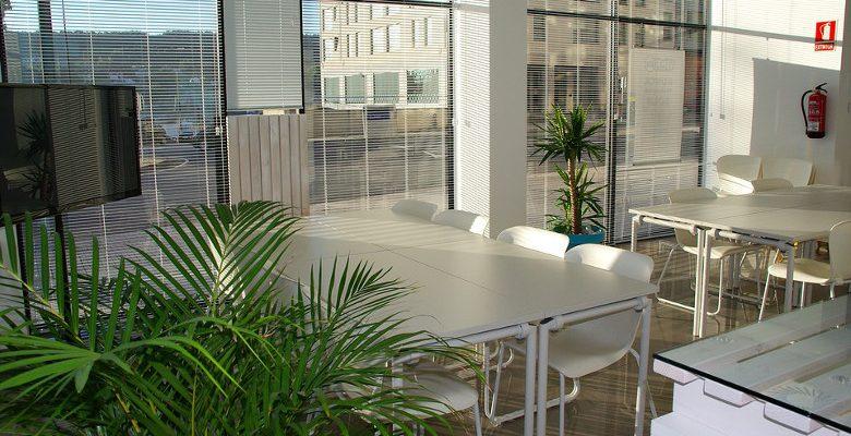 Aménagement des bureaux d'entreprise : les plantes décoratives